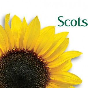 Scotsdales Garden Centre sunflower logo